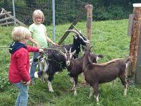 Kinder zusammen mit Ziegen auf der Wiese